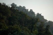 Tree serenity