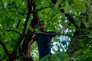 Ioan in a Cherry Tree collecting one of our detour rewards