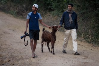 Dilip & Manwhar Singh leading a lost goat home past a leopardess Photo: ILeontie